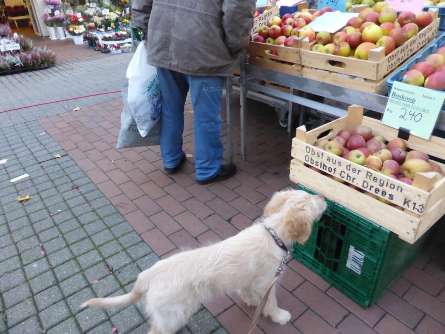 Umwelterleben: Mittwochs beim Markttag