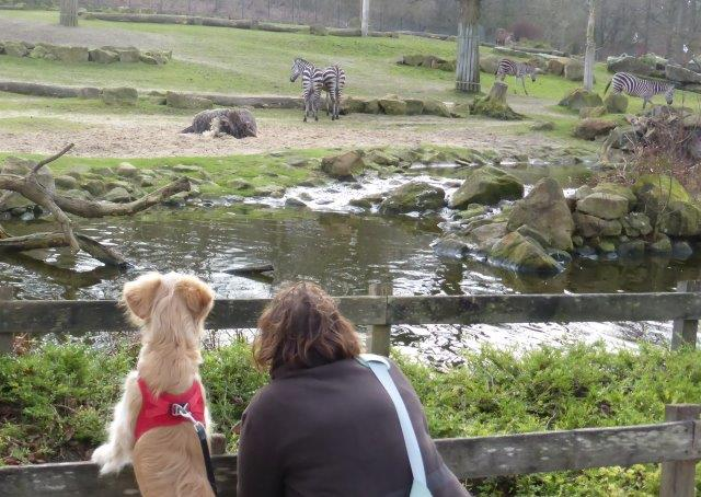 Umwelterleben:Tag im Zoo