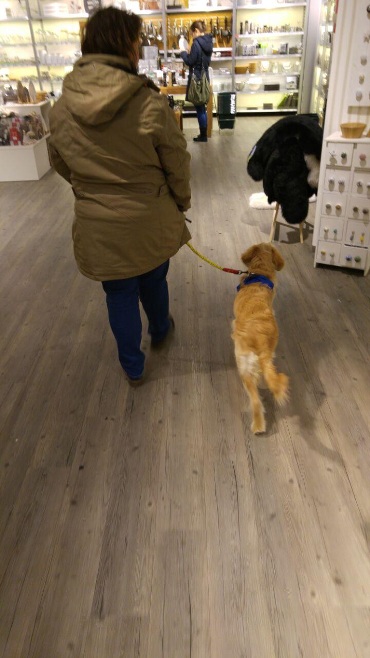 Sozialisierungstraining: Einkaufsgalerie