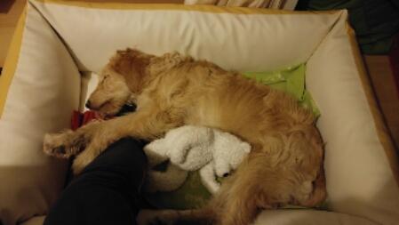 Stress bei Hunden – weil dieses Thema sehr hundewichtig für jeden Besitzer ist!