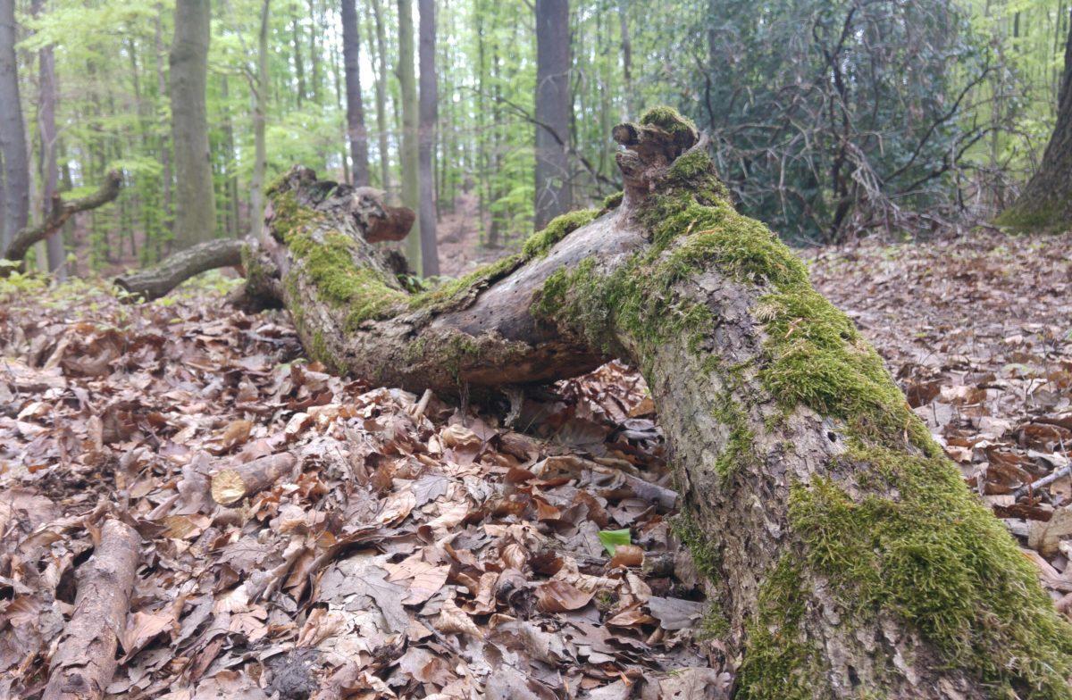 Sonntagswaldspaziergänge